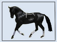 black_horse_on_blue_for_website.jpg